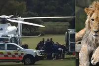 Ošetřovatelku ze zoo potrhali lvi: Zaútočili, když uklízela klec, je v kritickém stavu