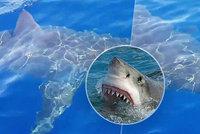 Šestimetrový žralok bílý chtěl sežrat posádku malé lodi: Kroužil kolem a číhal na ni!