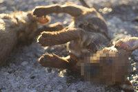 Strážníci brutálně zabili štěňátka: Hodili je do žumpy! Po 4 letech je konečně odsoudili