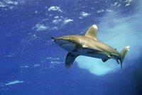 Žralok ukousl chlapci (12) ruku! Při útoku paryby v Egyptě přišel o končetinu i průvodce