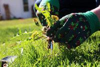 Jak se zbavit plevele v trávníku: 5 osvědčených triků podle našich babiček!