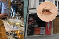 Dovolená na Moravě po pandemii: Češi skebabem, skvělé víno i otravní komáři