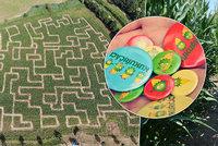 Bloudění v kukuřičných bludištích: Největší labyrint je v Praze a má 3 kilometry! Co je v něm schované?