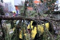 Silný vítr bičuje Prahu! Hasiči zasahují u požárů a odstraňují stromy popadané na auta