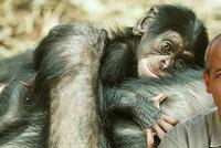 Místo po uznávaném odborníkovi Čolasovi (†55) je volné: Zoo v Ostravě hledá nového ředitele