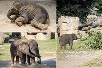 """Do pražské zoo nemohli, tak poslali peníze: Lidé podpořili zvířata 15 miliony, nejvíc """"frčeli"""" sloni"""