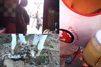 """Nelegální """"zabijačky"""" stovek kradených psů: Vyškvařené sádlo má odbyt až v Británii!"""