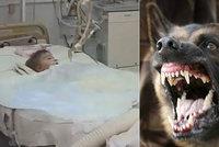Chlapec (2) bojuje o život: Dva vlčáci mu roztrhali genitálie a anální otvor!