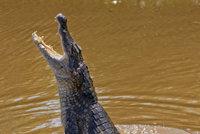 Překvapení i zděšení. Nedaleko českých hranic se v Odře objevil metr dlouhý aligátor