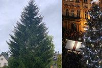 """Vánoční strom pro Prahu vybrán! """"Staromák"""" má ozdobit smrk z Jílového, osud trhů je ale nejistý"""