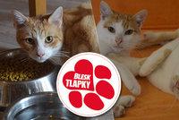 Žili ve vlastních výkalech. Úřady je odebraly, teď čtyři kočičí bratři hledají nové domovy