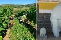 Překvapivá novinka: Vinaři nechávají zrát víno v betonu! Prý je lahodnější a mohutnější