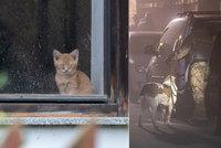 V domě v Líském se svítí, přestože zeje prázdnotou: Co bude s kočkami a pejsky, o které se Kristýna starala?