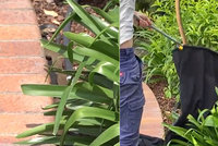 Smrtelně jedovatý had si spletl samičku se zahradní hadicí: Marně se ji pokoušel oplodnit