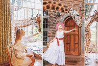 Hitem Instagramu je unikátní hotel v Keni: V Giraffe Manor můžete posnídat s ohroženým druhem žiraf!