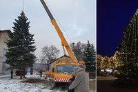 Vánoční strom Jirkova zasazoval dárce před 45 lety synovi: Rodina 15metrový smrk darovala městu