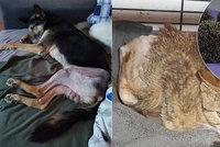 Do přírody už se nevrátí, bez pomoci ale nezůstala: Zmrzačená zvířátka si adoptovalo 100 zájemců