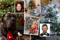 Vánoční stromečky celebrit: Anna K. ukázala pejska, Myslivcová prsa, Konvičková dárek a Stránský levitující jehličnan!
