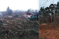 Do Rohatce na Hodonínsku najeli lesníci s těžkou technikou: Před očima užaslých obyvatel vykáceli borovicový háj