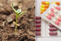 Půda je zamořená léky. Hrozba pro přírodu? Nejhorší jsou antibiotika, hlásí čeští vědci