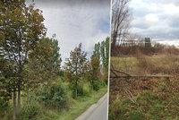 Vandal pokácel tři zdravé javory v Kunraticích, škoda 105 tisíc! Kvůli nelegálnímu billboardu?!