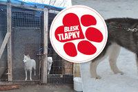 Strážnice množí psy a na načerno je prodává. Za porušení zákonů vyvázne jen s pokutou?