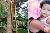 Kobra zabila batole v postýlce, zatímco jeho maminka sklízela rýži