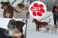 Trojice psů trčí už rok v útulku. Úřady neví co snimi, bez lejstra je nelze dát k adopci
