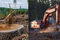 """Do Česka se dostává nelegální dřevo, tvrdí aktivisté. I IKEA řeší obvinění z """"nekalostí"""""""