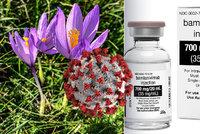 Hledání léku na covid: Remdesivir selhal, ale naděje tu je. Pomohou jed z ocúnu či jiné látky?