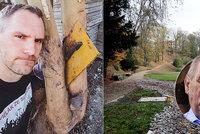 Hřib píše Zemanovi: Nekácejte v Jelením příkopě stromy! Jen »hejtuje« druhé, zní z Hradu