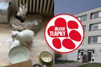 Nelegální množírna v 70metrovém bytě: 41 týraných koček a mrtvá koťata! Chovatelce hrozí půlmilionová pokuta