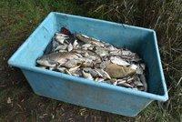 Další otrávená řeka? Bílina se zakalila, zapáchá a jsou v ní uhynulé ryby, hlásí rybáři