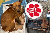 Zbytečné roky pekla: Majitel zubožených zvířat dostal už dřív podmínku, ale množil dál