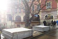 Nekonečný boj o javor v centru města. Praha Sobě chce svolat další mimořádné zasedání rady