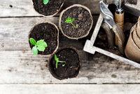 Jak levně pěstovat zeleninu? Použijte odřezky z kuchyně! Takhle to funguje!