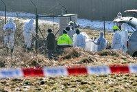 Ptačí chřipka se objevila i na severu Čech: Uhynuli pštrosi, labuť i páv