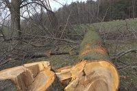 Vandal brutálně poškodil desítky stromů v Zašové na Vsetínsku! Mnoho jich museli rovnou pokácet