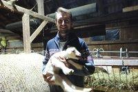 Nadělení jehňat! Bačovi Markovi z Hrčavy ovce rodí dvojčata a trojčata, má už 60 mláďat