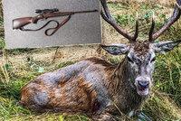 Konec pátrání po jelenovi s brokovnicí: Zvíře pušku zahodilo i s parohy