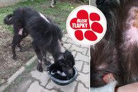 Pět let za týrání Nelinky?! Policie obvinila krutou paničku, psovi zalepila tlamu páskou