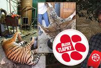 Je libo tygra? V Česku kvete obchod se šelmami. Zvířata znevhodných podmínek není kam dát