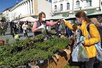 Zelný trh v Brně otevřel: Lidé ho vzali útokem! Ke koupi sazeničky a bylinky, pak i maso