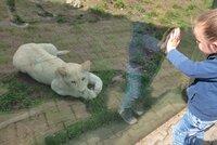 Fronta na zoo! Před zahradou v Hodoníně se lidé tlačili už před otevřením, chtěli na lvy