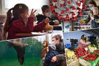 Koronavirus ONLINE: V Česku ožily školy, obchody, trhy i zoo. A Babiš chce sport pro 12 lidí