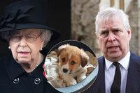 Osamělá a truchlící královna Alžběta II. (95): Jediná vzpruha od nezvedeného syna!