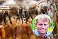 Unikátní a pradávný chov včel: Milan leze po stromech a dlabe v nich brtě