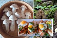 Rostou další jarní houby! Za kilo smržů tisícovka, májovku prozradí čarodějné kruhy!
