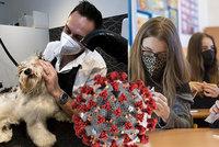 Koronavirus ONLINE: Návrat druhých stupňů místy drhl, napilno mají salony pro lidi i psi