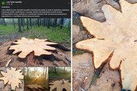 Stovky let starý zdravý dub u Krnova pokáceli: Pochybil revírník, tvrdí Lesy ČR